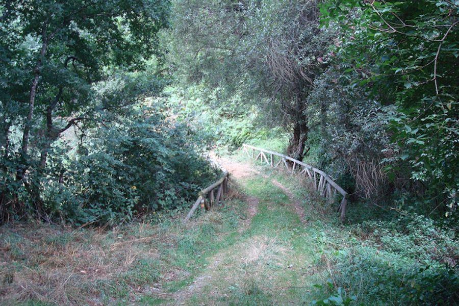 Ruta verde las Carballeiras